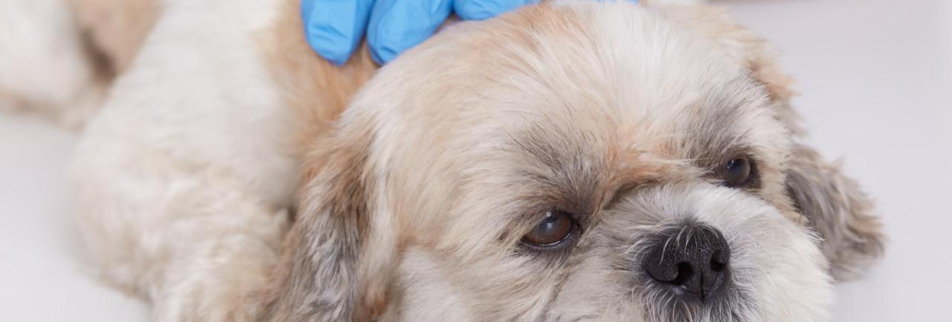 Cães e gatos doentes? Saiba quais são os 10 sinais de alerta e fique tranquilo neste final de ano