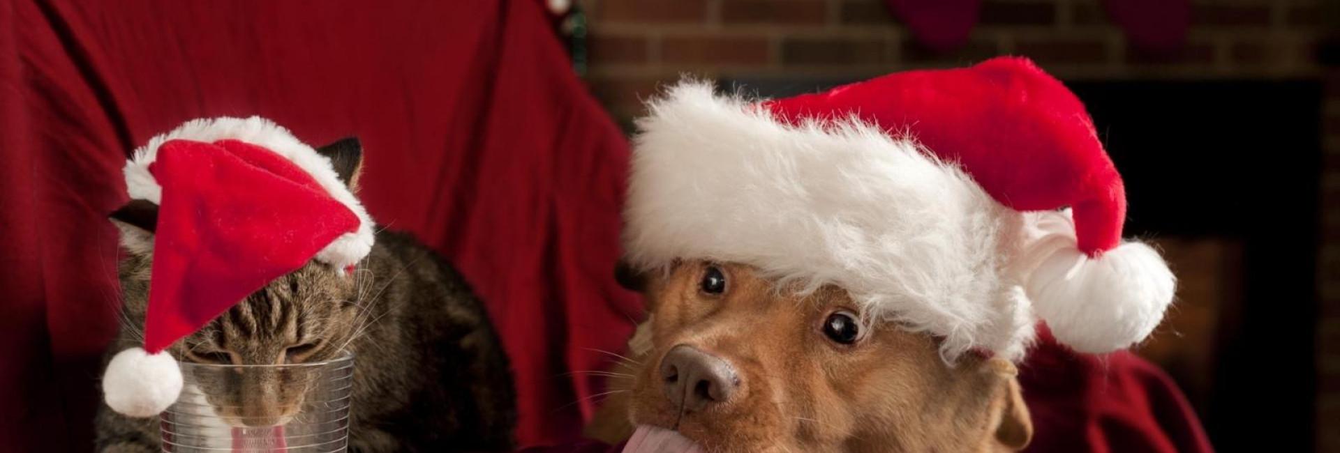 Festas de fim de ano: seu pet pode participar, mas é preciso cuidado com a intoxicação alimentar.