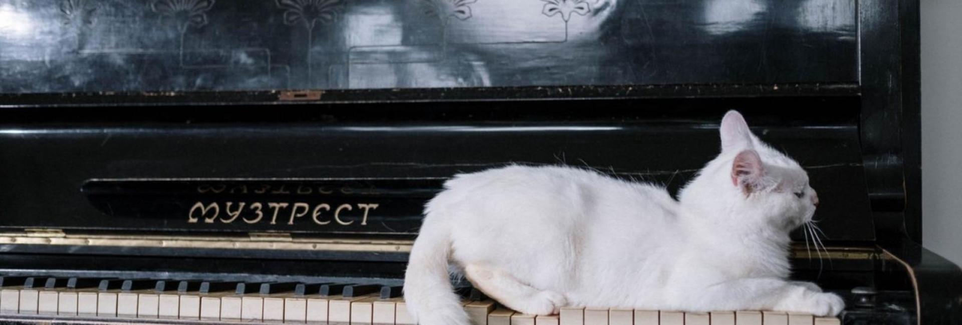 Você sabia que o movimento do rabo do gato demonstra como ele se sente?